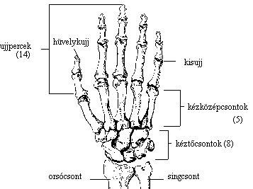 a végtagok ízületei artrózisa