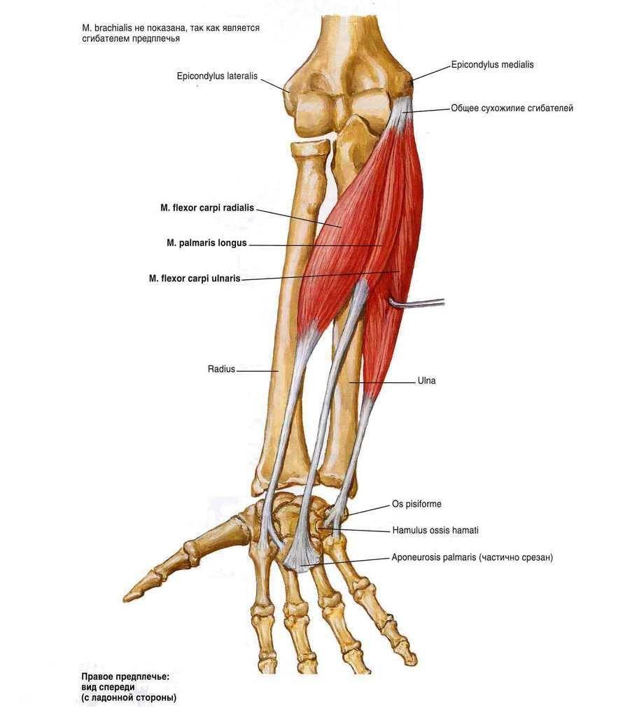 a térdízület kezelésének keresztezett ligamentumainak sérülése jobb oldali csípőtáji fájdalom