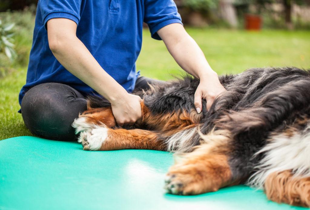 kézízületi gyulladáskezelés a csípőízület fáj és lábát adja