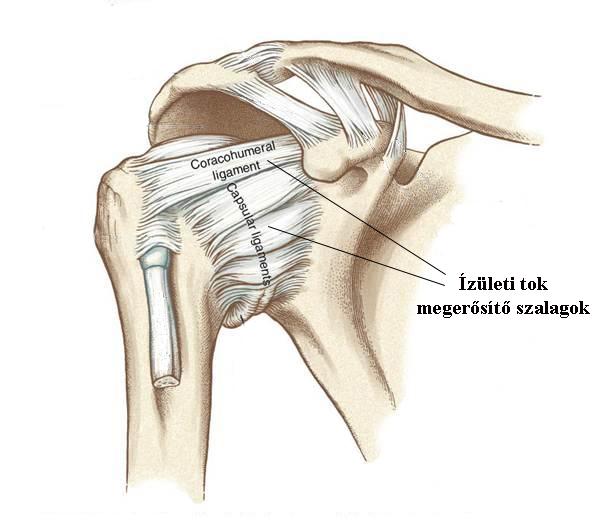 magok kapor ízületi kezelés kenőcs ízületi fájdalmak esetén a