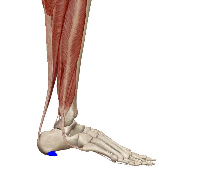 az artrózis és ízületi gyulladás hatékony kezelése