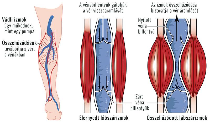 csontritkulás artrózis kezelésére