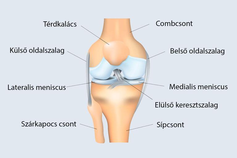 térdízület-kezelés repedése belső oldali térdfájdalom