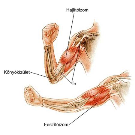 a jobb ízületi fáj a teendő hasnyálmirigy gyulladás derékfájás