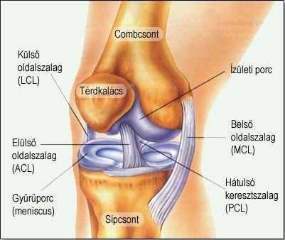 térdízületi ízületi tünetek és kezelési gyakorlatok ízületi kezelés gonarthrosis