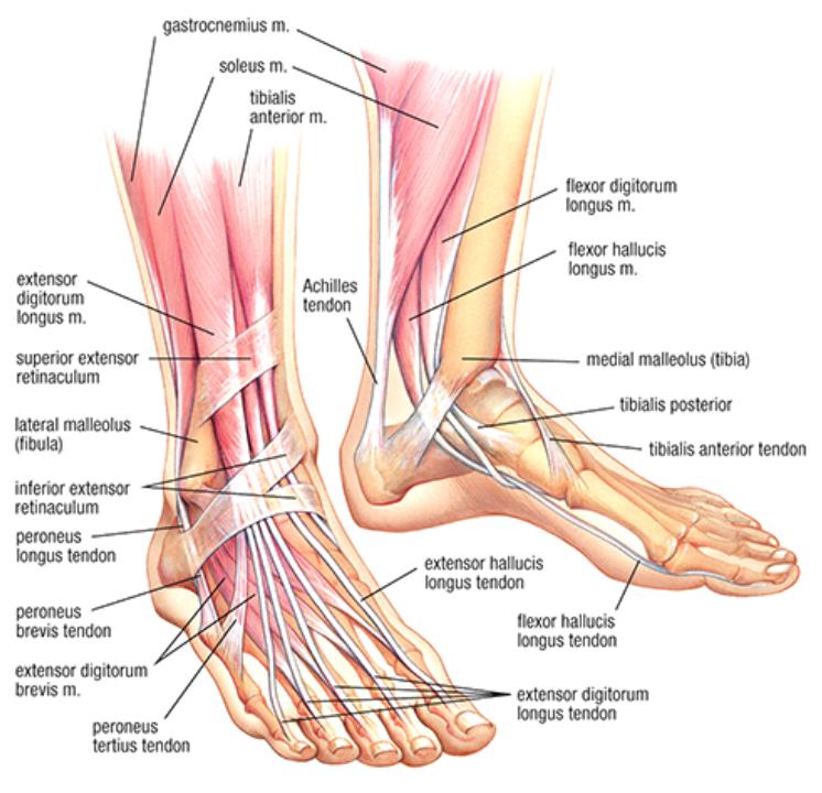 az artrózis kezelése a kalugában a hüvelykujj ízülete fájdalmat okoz