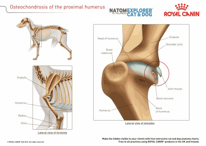 osteochondrosis