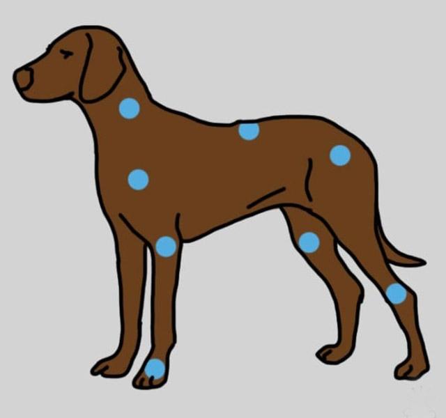 a rottweiler ízülete fáj az ízületek fájdalmat okoznak a mononukleózis után