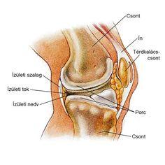 hogyan kezeljük a térd tendinosist ízületi fájdalom a medencében