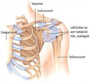 mellkasi gerinc kenőcsének osteochondrosis
