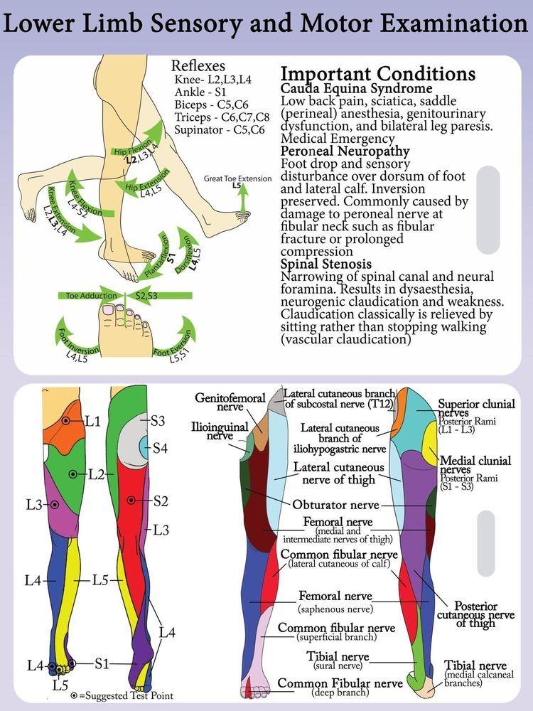 a sacrum ízületének gyulladása napraforgóolaj ízületi kezelésre