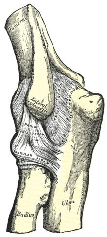 az acromioclavicularis ízületek ízületi gyulladása glükózamin és kondroitin komplex 60 kapszula