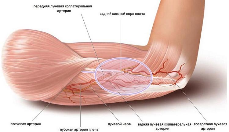 ízületi fájdalom mononukleózissal éles fájdalom a csípőízületben és térdben