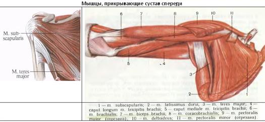 az axiális vállízület artrózisa 2 fok áttekintés az ízületi fájdalmak orvoslásáról