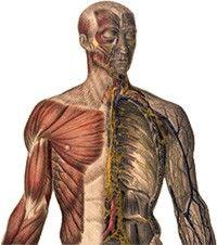 emberi csípő sérülés