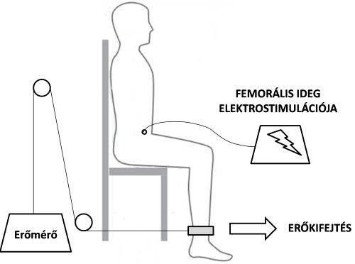 illóolaj ízületi betegségek kezelésére