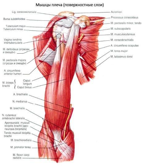 brachialis deformáló artrózis kezelése