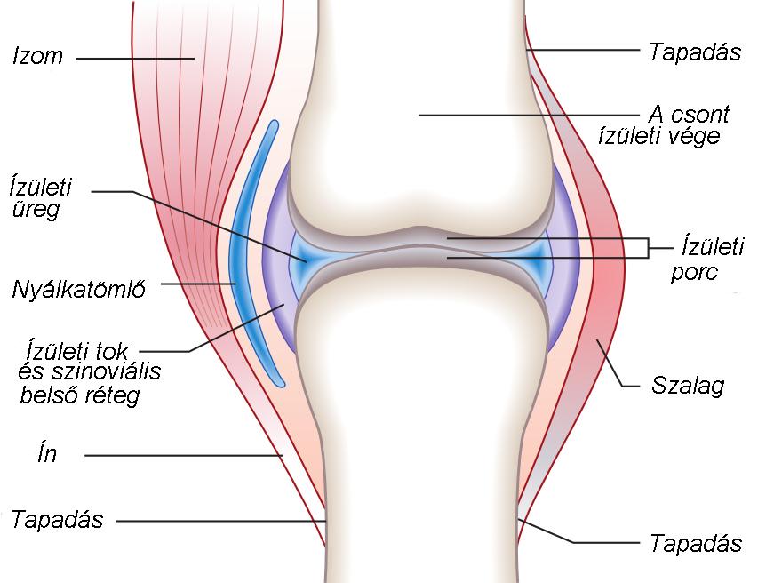 a köröm kötőszövetének gyulladása modern térdízületi kezelés