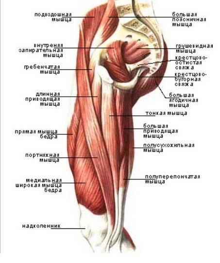 csípőízület trochanterikus bursitisz térd- és csípőízületi fájdalmak
