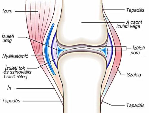 a térd súlyosbodása ízületi kezelés után hogyan kezeljük az izmok fájdalmait az ízületek közelében