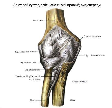 fájó ligamentum a könyökízületben
