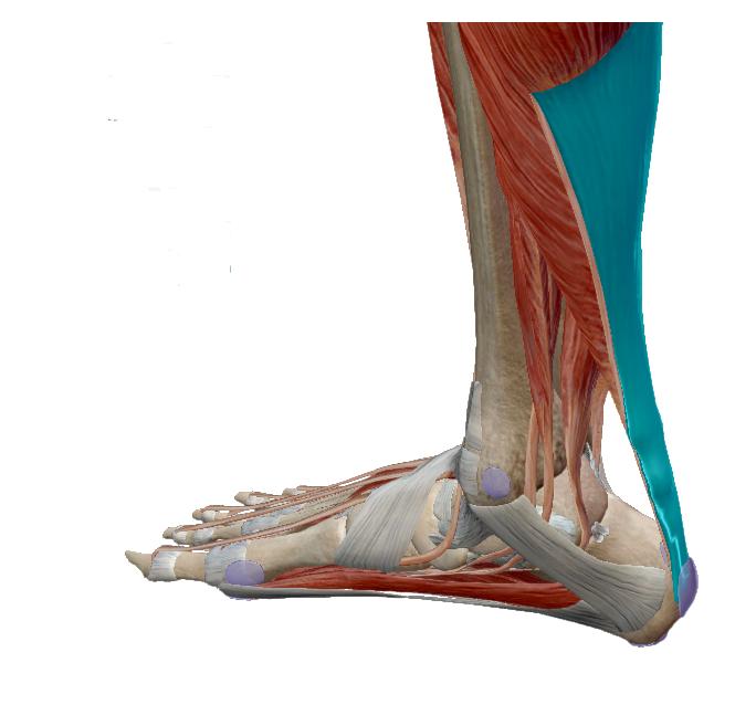 futó fájdalom után a lábak ízületeiben