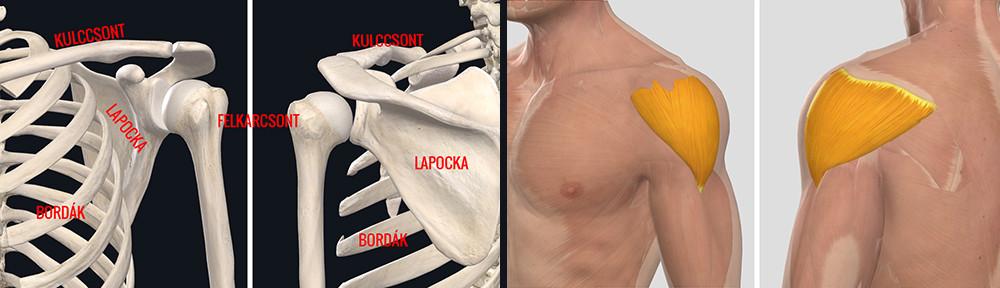 hogyan lehet gyógyítani a vállízület gyulladását a térd szörnyű fájdalma