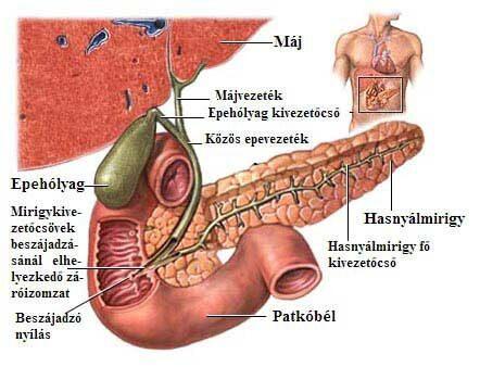 orvosi epe térdízületi gyulladás esetén
