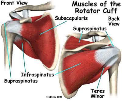 deformáló artrózis térdkezelés vándorló fájdalmak a karok és a lábak ízületeiben
