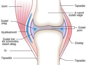 térdízületi gyulladásos kezelés 1 fokos