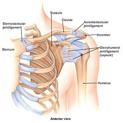 a térd artrózisát deformáló gyógyszer kenőcs a térd törése után