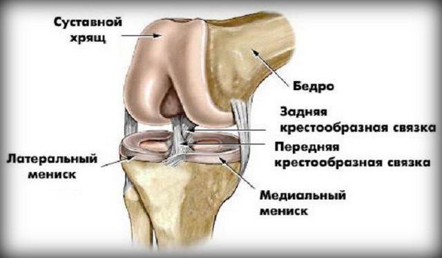 a térd háta fáj