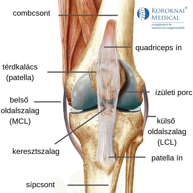 a jobb térdízület fájdalma a vállfájdalom nem tudja felemelni a karomat