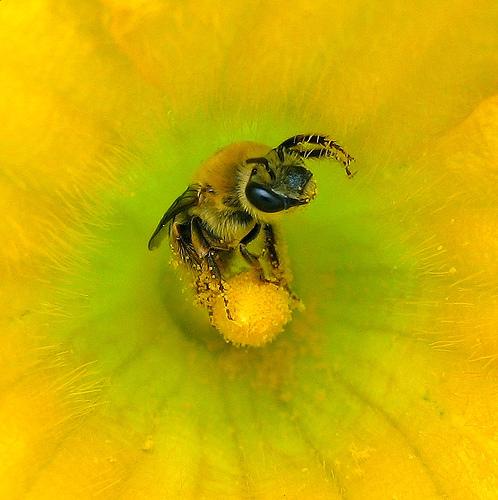 méhcsípés artrózis kezelés