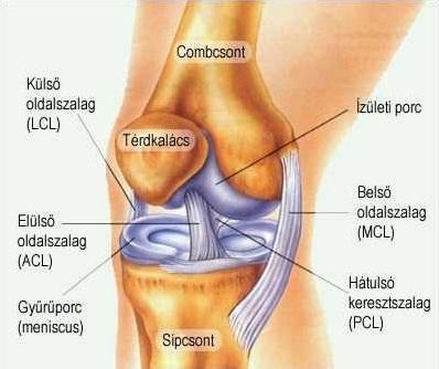 hogyan kenjük fel a térd artrózisát